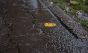 Суббота в Смоленской области будет дождливой