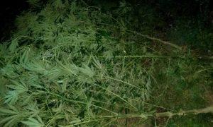 У жителя Смоленска полицейские нашли около трех килограммов наркотиков