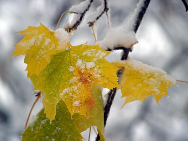 Синоптики рассказали, какая погода ждет смолян 30 октября