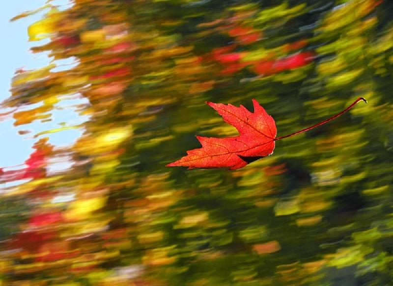 В Смоленской области объявили «желтый» уровень опасности на 31 октября