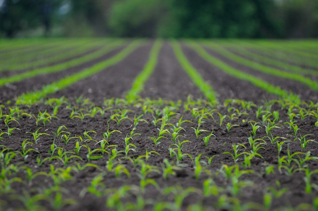Выбор и приобретение семян