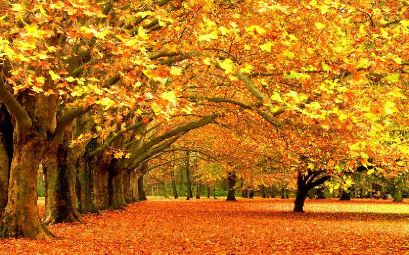Какая погода ждет смолян 10 ноября