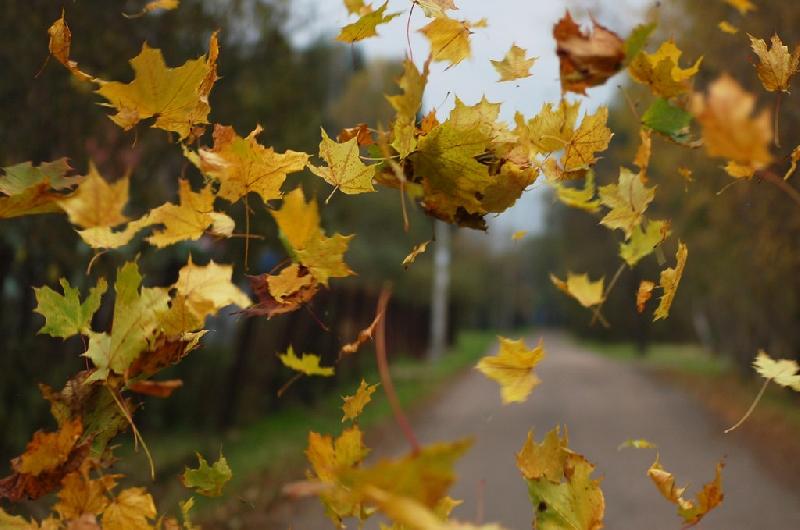 В Смоленской области объявили «желтый» уровень опасности на 13 ноября