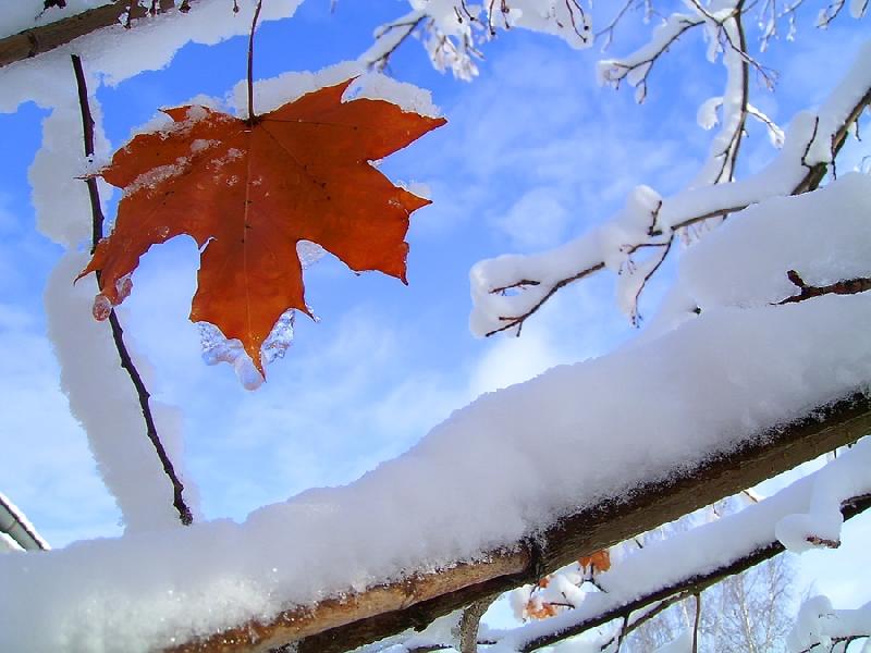 Синоптики рассказали, какая погода ждет смолян 16 ноября