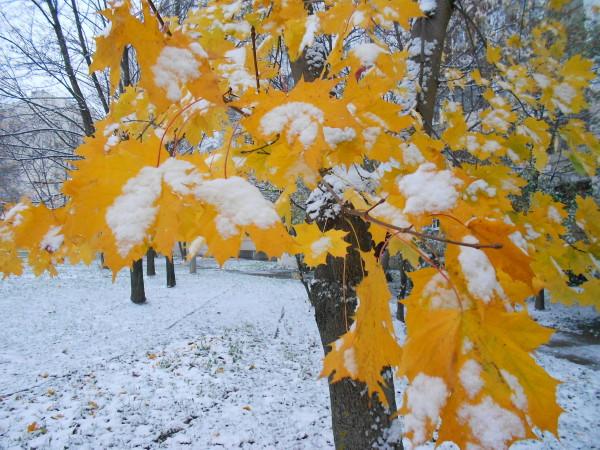 Синоптики рассказали, какая погода ждет смолян 17 ноября