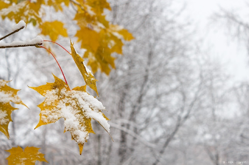 Синоптики рассказали о погоде в Смоленской области 20 ноября
