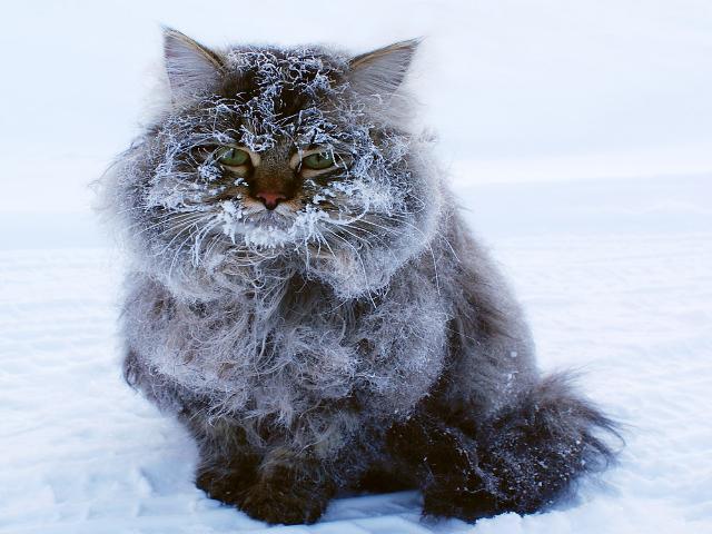 В Смоленской области похолодает еще сильнее