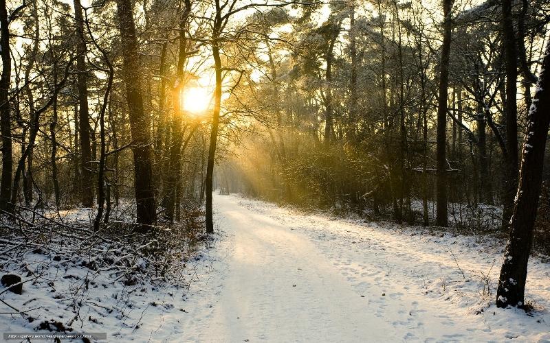 «Мороз, метель и ветер». Какая погода ждет смолян 21 декабря