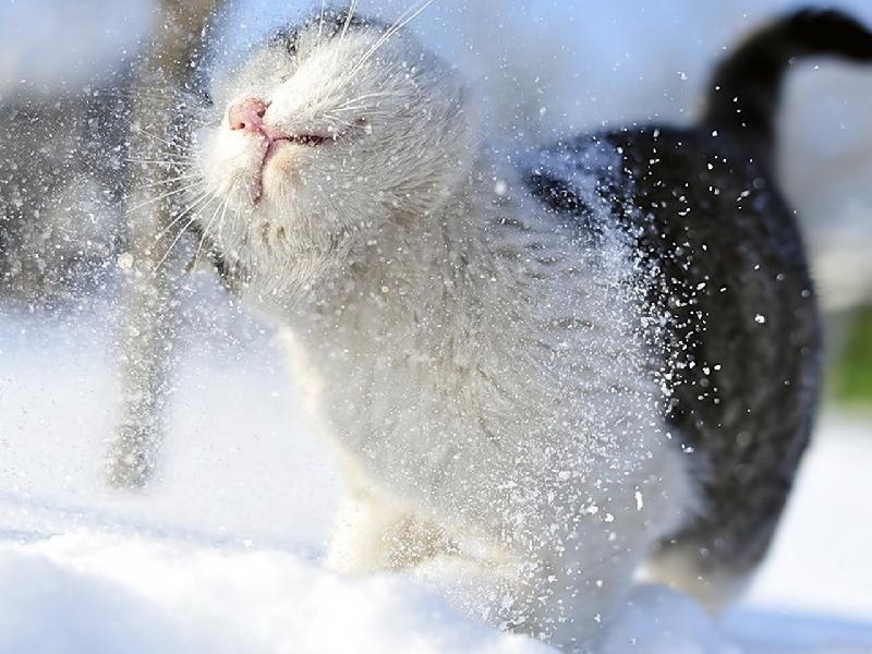 Синоптики рассказали, какая погода ждет смолян 25 декабря