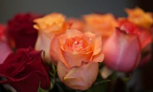 Зараженные цветы пытались ввезти в Смоленскую область