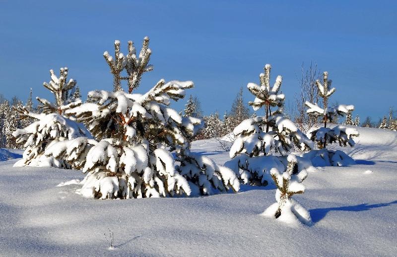 Синоптики рассказали о погоде в Смоленской области 7 декабря