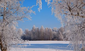 Синоптики рассказали, какая погода ждет смолян 24 января