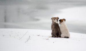 «Эту беззащитную крошку просто выкинули на улицу в мороз». В смоленском приюте спасают щенка