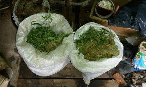 Смолянин выращивал марихуану на рабочем месте
