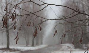 Синоптики рассказали, какая погода ждет смолян 2 февраля