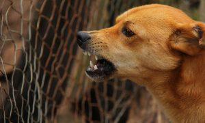 В Смоленской области бешеный пес укусил человека