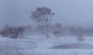 «Снег, метель и сильный ветер». Какая погода ждет смолян в День защитника Отечества