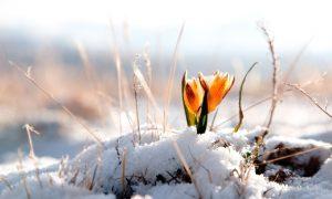 Когда смолянам ждать весну?