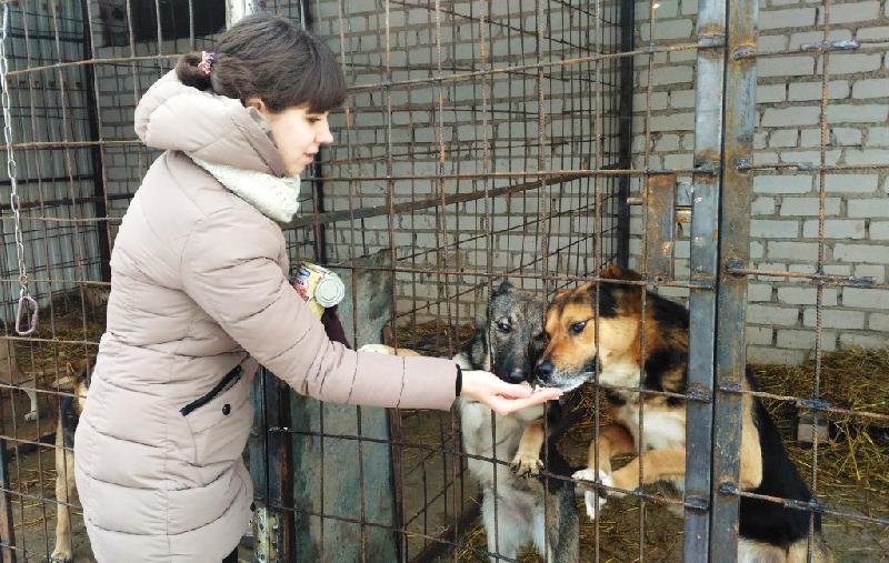 Собачий приют Натальи Беликовой просит о помощи!