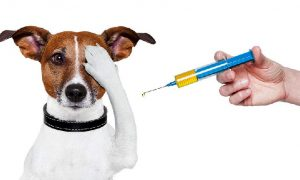 В Смоленске начнется бесплатная вакцинация домашних животных