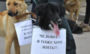В Смоленской области может появиться «горячая линия» по защите животных