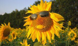 Гидрометцентр обещает смолянам жаркое лето