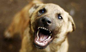 29 бешеных псов отловили в Смоленской области