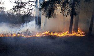 Первый в 2019 году лесной пожар произошел под Смоленском