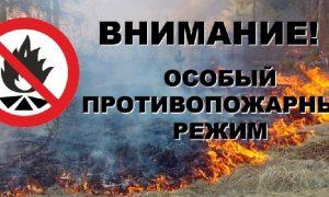 В Смоленске введен особый противопожарный режим