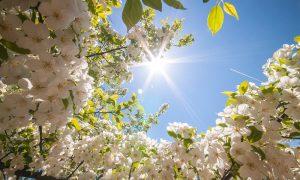 Какая погода ждет смолян в первый день мая?