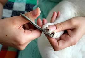Как обрезать когти кошке