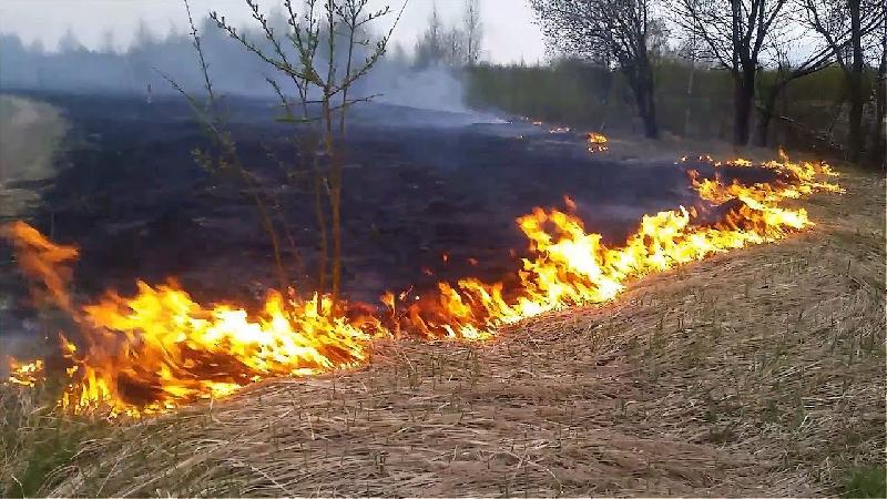 31 вызов за сутки: в Смоленской области не утихают палы