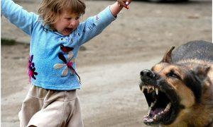 Следователи заинтересовались нападением собаки на ребенка в Смоленске
