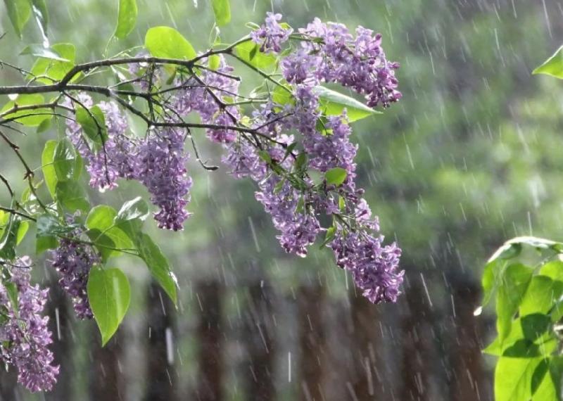 Чего смолянам ждать от погоды на 24 мая?