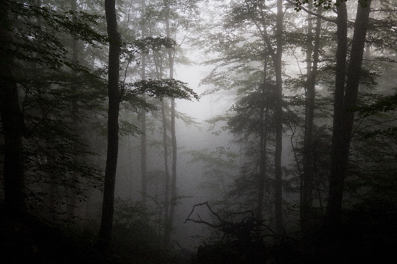 В смоленском лесу искали 14-летнюю девочку с собакой