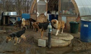 Смоленский приют для животных просит о помощи