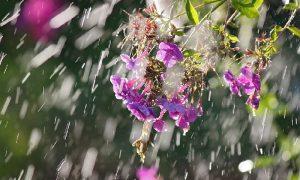 На Смоленщину возвращаются дожди и грозы