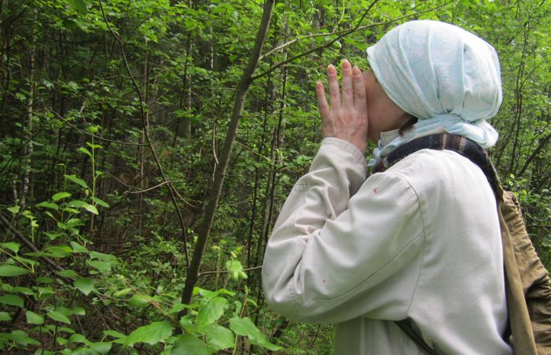 В смоленском лесу ищут пенсионерку