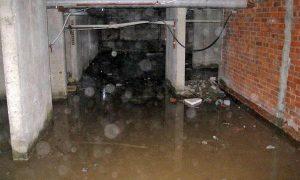 В подвале смоленского дома продолжают буйствовать блохи