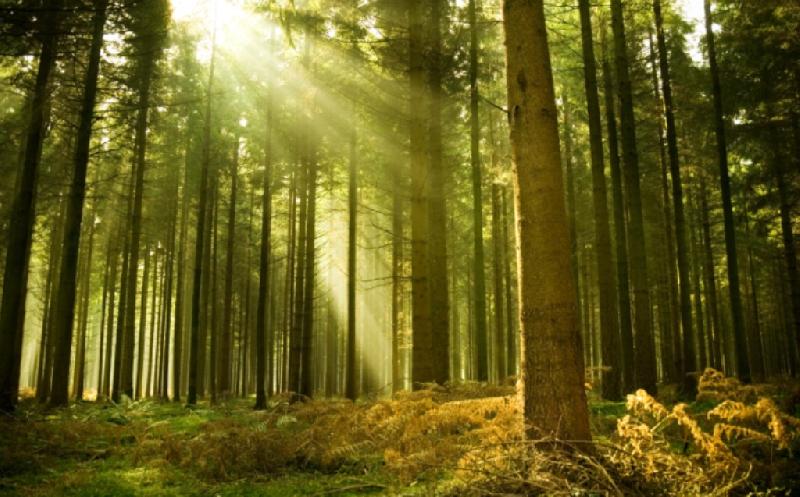 В смоленском лесу пропал 62-летний мужчина