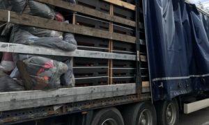 Смоленские таможенники задержали яблоки под видом ветоши