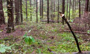 Стала известна судьба пропавшей в лесу смолянки