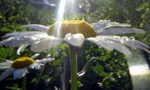 В Смоленскую область возвращается летнее тепло