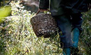 «Срочно нужны люди». В Смоленской области ищут 82-летнего грибника