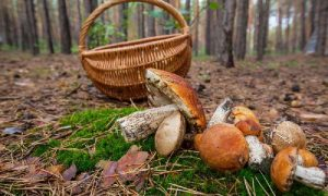 В Смоленской области поиски пожилого грибника завершились трагически