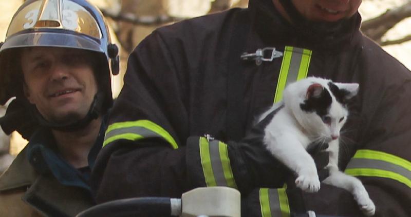 «Спасли мужчину и кота». Стали известны подробности ночного пожара в Смоленске