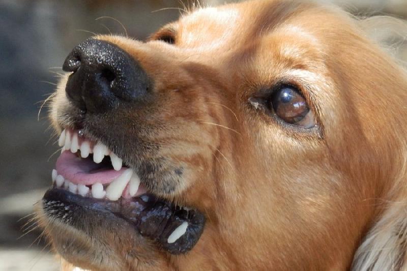 В Смоленске собака напала на двух женщин