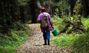 В смоленском лесу пропала женщина