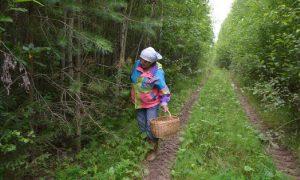 В Смоленской области пропала 68-летняя пенсионерка