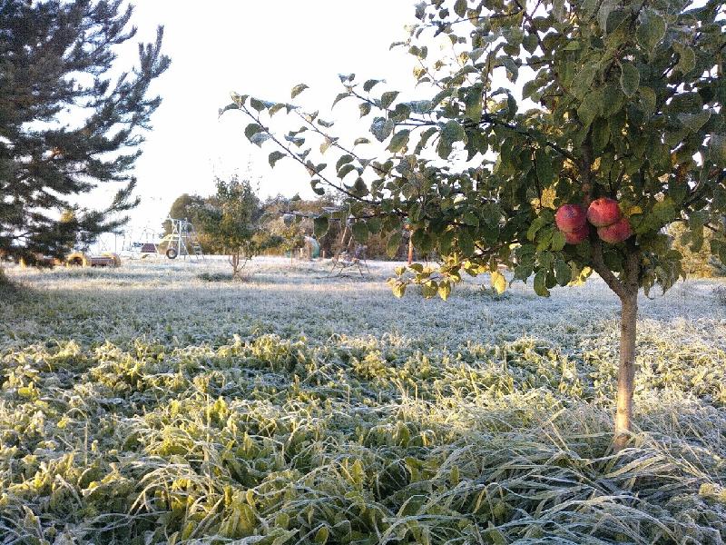В Смоленской области ожидают заморозки и снег